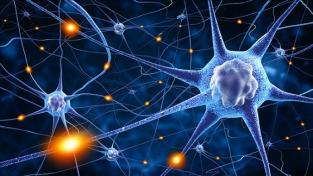 neuronas-formándose-min